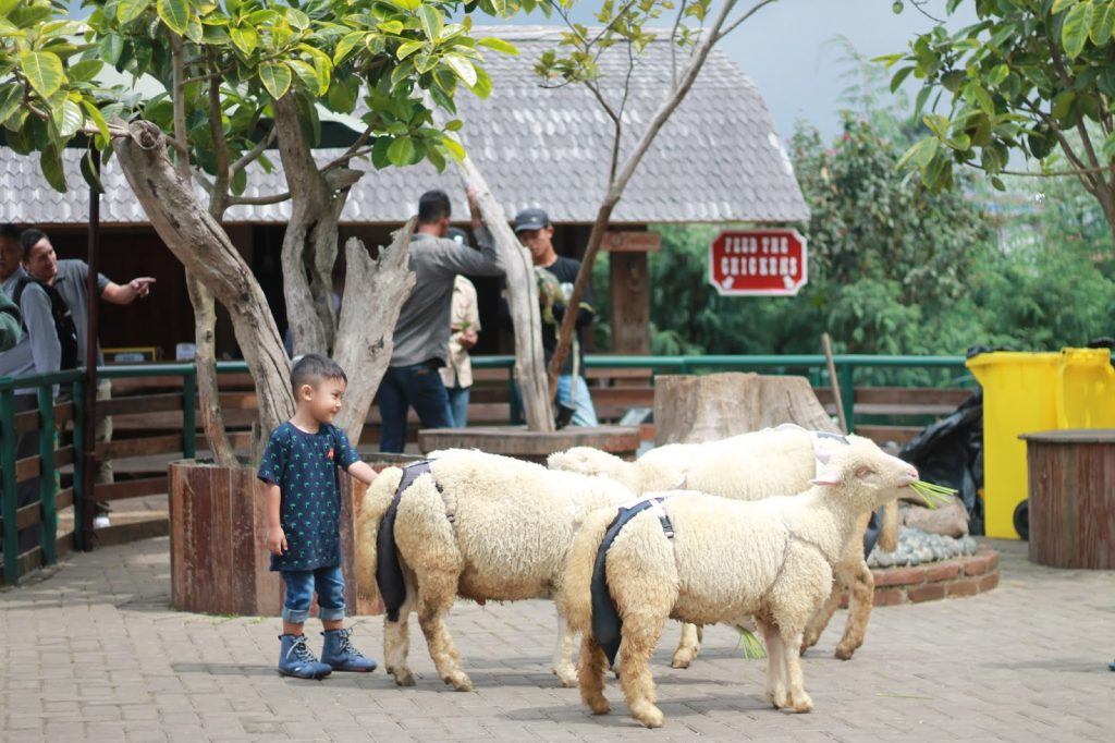foto dengan hewan farmhouse lembang