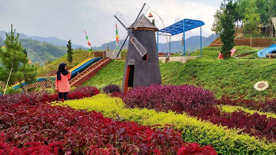 gambar kampung tulip