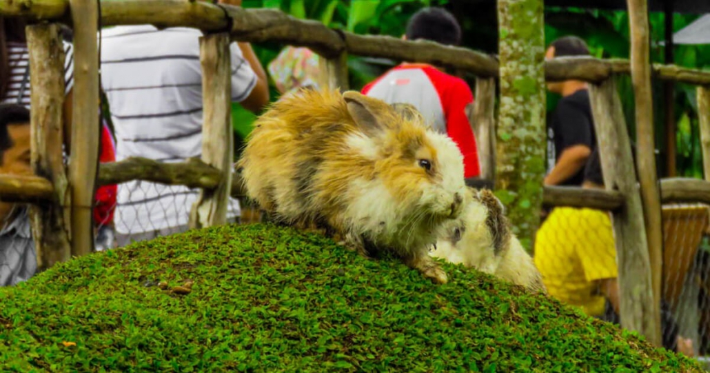gambar taman kelinci ciwidey