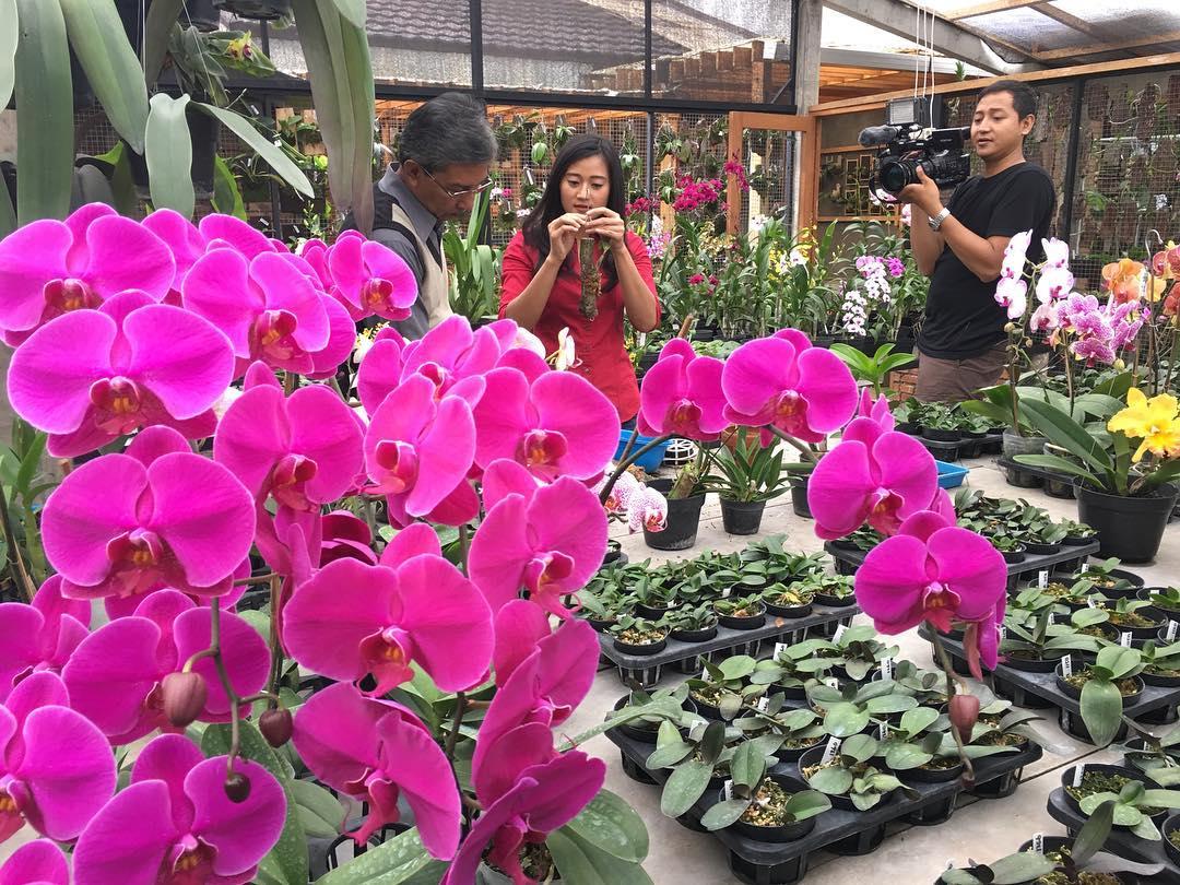 jam buka Taman Bunga Cihideung