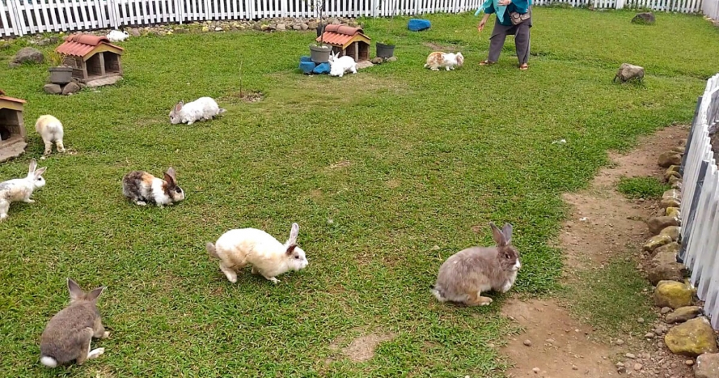 jam buka taman kelinci ciwidey