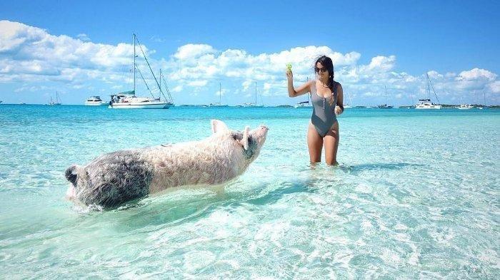 pantai pig terindah di dunia