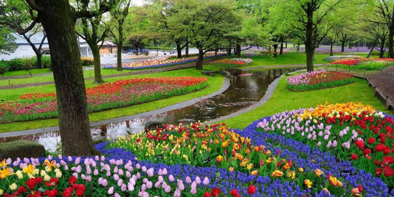wisata kampung tulip