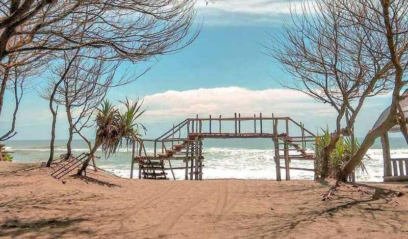 wisata pantai cemara sewu di bantul