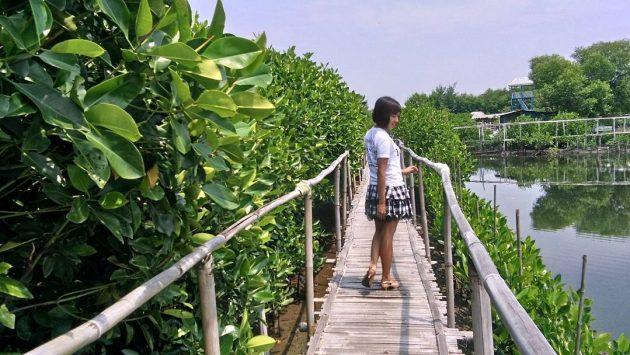 wisata pantai mangrove edupark di semarang