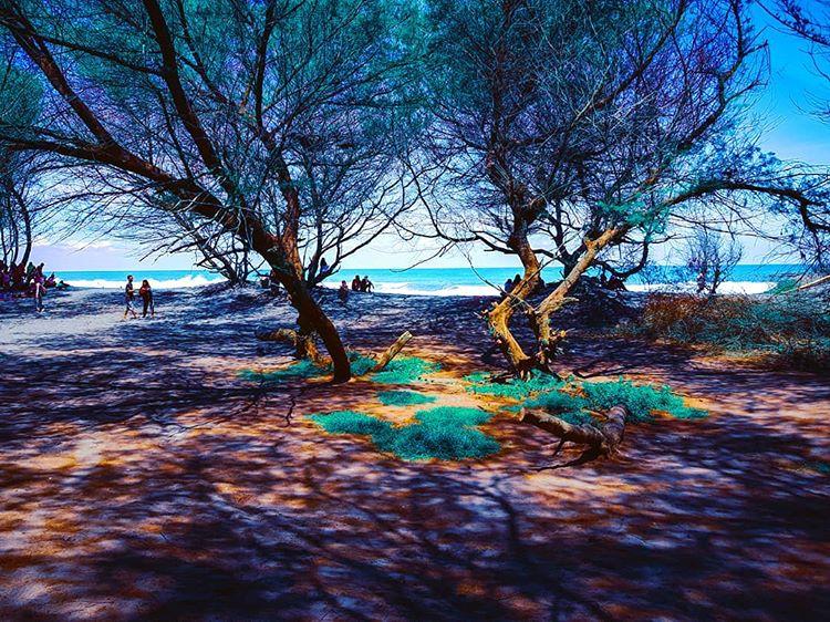 info keindahan pantai wisata goa cemara jogja