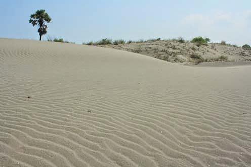 gumuk pasir pantai depok